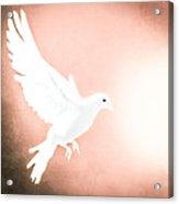 Dove In Flight Red Acrylic Print