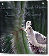 Love Doves Acrylic Print
