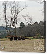 Down On The Farm Acrylic Print