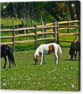 Down On The Ranch Acrylic Print