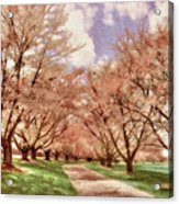 Down The Cherry Lined Lane Acrylic Print