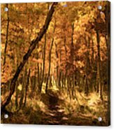 Down The Golden Path Acrylic Print