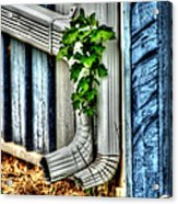 Downspout Acrylic Print by Doc Braham