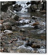 Downstream Acrylic Print