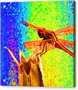 Dragon Fly- Creative Acrylic Print