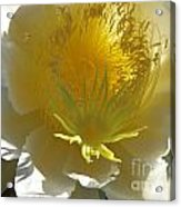 Dragon Fruit Blossom Iv Acrylic Print