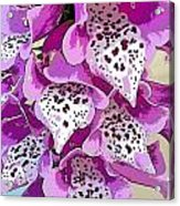 Dragon Lilly Acrylic Print