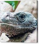 Dragon Lizzard Portrait Closeup Acrylic Print