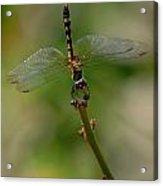 Dragonfly 2 Acrylic Print
