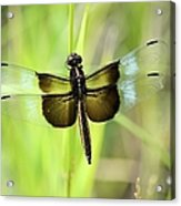 Dragonfly 9249 Acrylic Print