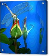 Dragonfly And Bud On Blue Acrylic Print