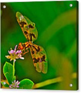 Dragonfly And Flower Acrylic Print