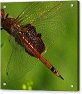 Dragonfly Art 2 Acrylic Print