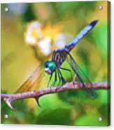 Dragonfly Art - A Thorny Situation Acrylic Print