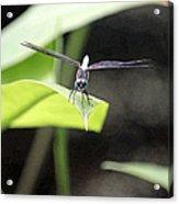Dragonfly Dimensions Acrylic Print