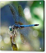 Dragonfly Elegance Acrylic Print