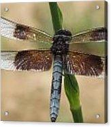 Dragonfly In Summer Acrylic Print