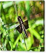Dragonfly Ins 22 Acrylic Print