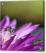 Dragonfly Macro On A Water Lily Acrylic Print