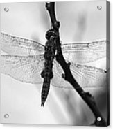 Dragonfly Mosaic Acrylic Print