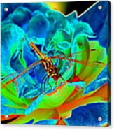 Dragonfly On A Cosmic Rose Acrylic Print