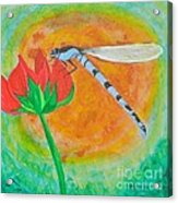 Dragonfly On Red Flower Acrylic Print