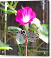 Dragonfly On Watch Acrylic Print by Walter Klockers