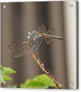 Dragonfly Profile Acrylic Print