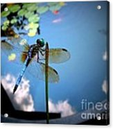 Dragonfly Reflecting On A Beautiful Day Acrylic Print