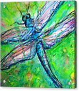 Dragonfly Spring Acrylic Print