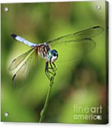 Dragonfly Square Acrylic Print
