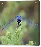 Dragonfly Acrylic Print by Susan Sidorski