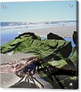 Dragonfly's Day At The Beach Acrylic Print