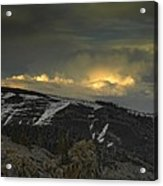 Drama Is Coming Acrylic Print by Donna Blackhall