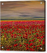 Drama Over The Flower Fields Acrylic Print