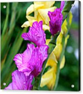Dramatic Gladiolus Acrylic Print