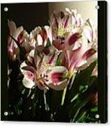 Dramatic Lilies Acrylic Print