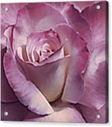 Dramatic Plum Rose Flower Acrylic Print