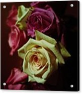 Dramatic Purple And Yellow Roses Acrylic Print