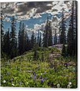 Dramatic Rainier Flower Meadows Acrylic Print