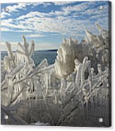 Draped In Icy Beauty Acrylic Print