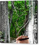 Drawn To The Woods With Imagination Acrylic Print