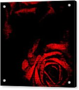 Dread Roses Acrylic Print