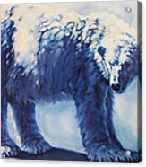 Dream Bear Acrylic Print