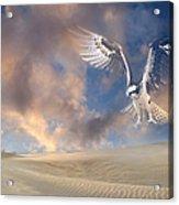 Dream Hawk Acrylic Print