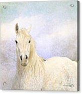 Dream Horse Acrylic Print