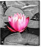 Dream Lily Acrylic Print by Mariola Bitner