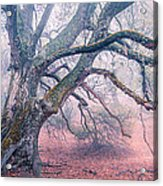 Dream Oak II Color 2 Acrylic Print