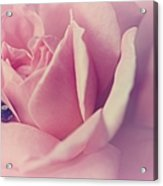 Dream Rose Acrylic Print