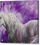 Dream Stallion Acrylic Print